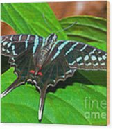 Black Swordtail Butterfly Wood Print