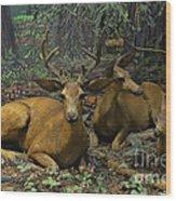 Black Tail Deer Wood Print