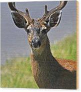 Black Tailed Deer Wood Print
