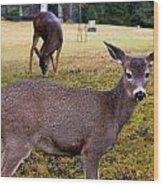 Black-tailed Deer Wood Print
