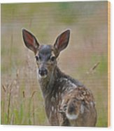 Black Tailed Fawn Wood Print