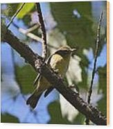Black-throated Blue Warbler Wood Print