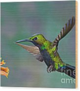 Black-throated Brilliant Wood Print