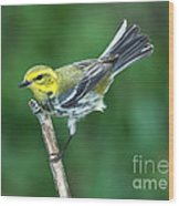 Black-throated Green Warbler, Female Wood Print