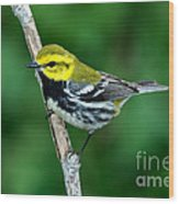 Black-throated Green Warbler, Male Wood Print