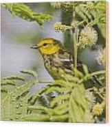 Black-throated Gren Warbler Wood Print