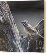 Black Throated Sparrow Wood Print