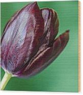 Black Tuip Wood Print
