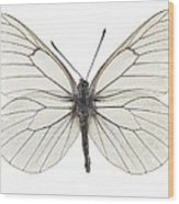 Black-veined White Butterfly Wood Print