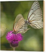 Black-veined White Wood Print
