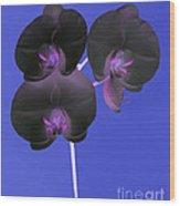 Black Velvet Orchid Wood Print