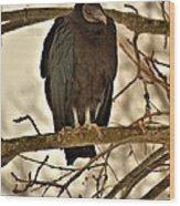 Black Vulture 1 Wood Print