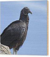 Black Vulture - Coragyps Atratus  Wood Print