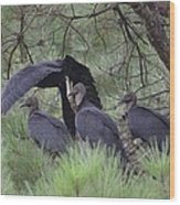 Black Vultures II Wood Print