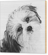 Black  White Puppy Wood Print by Paulina Szajek