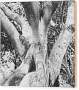 Black White Tree Large Trunk Nature Sculpture Fall Fine Art Photography Deco Wood Print