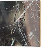 Black Widow Wood Print