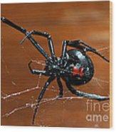 Black Widow Spider Wood Print