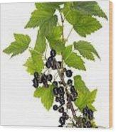 Black Wild Forest Berries Wood Print