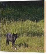 Black Wolf   7251 Wood Print