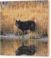 Black Wolf Reflection Wood Print