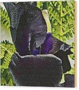 Blackbeard Framed  Wood Print