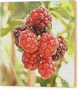 Blackberries Ripening Wood Print