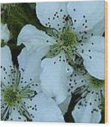 Blackberry Blossoms Wood Print