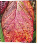 Blackberry Leaf In The Fall 3 Wood Print