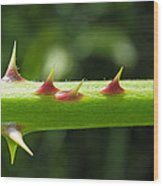 Blackberry Thorns Wood Print