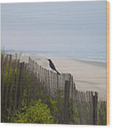 Blackbird On A Fence On The Beach Wood Print by Bill Cannon
