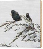 Blackbirds In Snow Wood Print