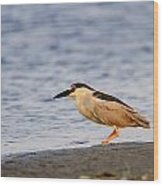 Blackcrowned Night Heron Wood Print