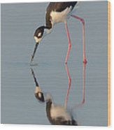 Blacknecked Stilt With Reflection Wood Print