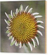 Blacksamson Echinacea Wood Print