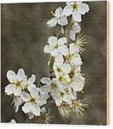 Blackthorn Or Sloe Blossom  Prunus Spinosa Wood Print
