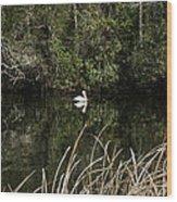 Blackwater River Pelican Wood Print