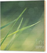 Blades Of Grass Bathing In The Sun Wood Print