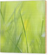Blades Of Grass - Green Spring Meadow - Abstract Soft Blurred Wood Print by Matthias Hauser