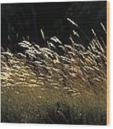 Blades Of Grass In The Sunlight Wood Print by Jim Holmes