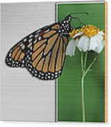 Blank Greeting Card 5 Wood Print