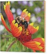 Blanket Flower And Bumblebee Wood Print