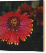 Blanket Flower I  Wood Print