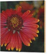Blanket Flower II Wood Print