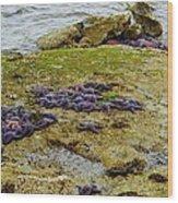 Blanket Of Seastars Wood Print