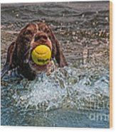 Blaze Retrieving Wilson 3 Wood Print