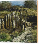 Blazing A New Trail  Wood Print