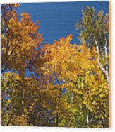 Blazing Autumn Colors - Just Lift Your Head Wood Print