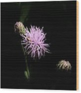 Blazing Star Wood Print