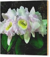 Blc Mary Ellen Underwood Krull-smith Wood Print